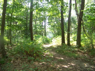 pleasant trail in holbrook town forest