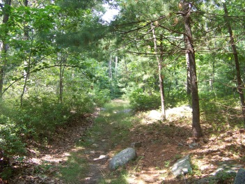 rustic trails of holbrook town forest