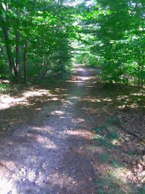 Pleasant multi purpose trail from the Campground to Holly Pond and beyond at Wompatuck State Park.
