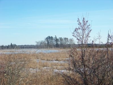 cedar swamp above burrage pond