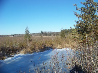 view of cedar swamp from indian crossway