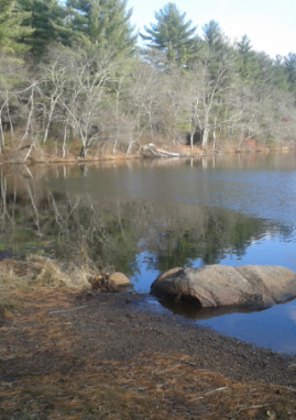scenic spot along luddams ford trail