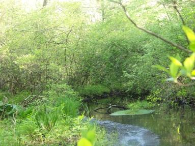 upstream on Phillips Brook