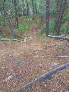 A steep trail leading down to a pond along the trail.