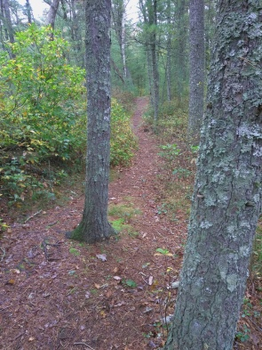 Interesting narrow trail through the Lansing Bennett Forest.