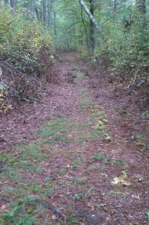 Rough hewn trail in Lansing Bennett Forest.