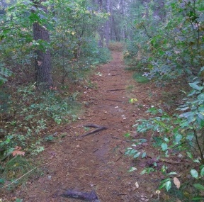 Wide pleasant hiking trail at Lansing Bennett Forest.