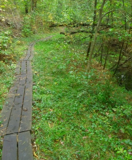 Boardwalk trail at Lansing Bennett Forest