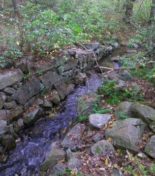 Remaining stone work of the Howland Mill at Lansing Bennett Forest.