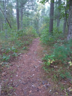 Hiking trail leading out to Cross St in Duxbury at the Lansing Bennett Forest.