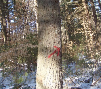 red arrow marks the way at mckenna marsh