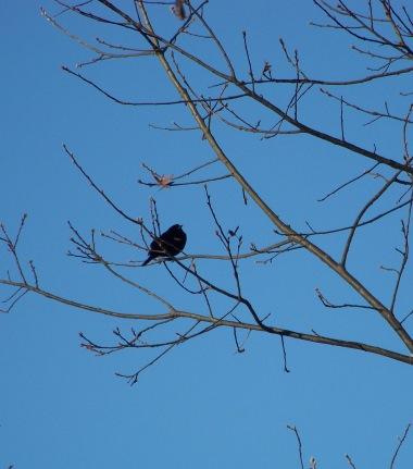 bird song at mckenna marsh