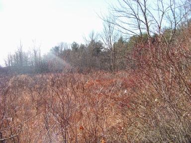 Meadow like wetland at silver lake sanctuary.