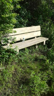 The river side bench at misty meadows conservation area