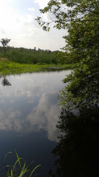 view of the water at the end of the North River Trail in Misty Meadows