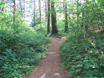 hiking trail down to crescent st at myles standish monument state reservation
