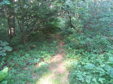 narrow start to the longest trail at myles standish monument reservation