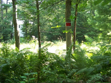hiking trail of rockland town forest passes by it's neighbors
