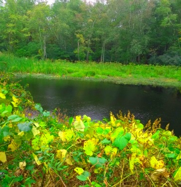 Picture Pond in early fall at Wompatuck State Park.