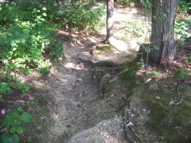 short rugged trail in pond meadow park