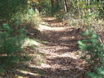 hiking trail at pudding hill in marshfield