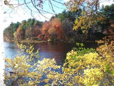 chandler pond in autumn in marshfield