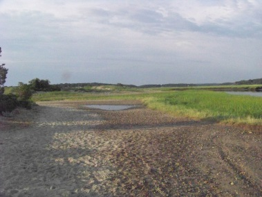 after high tide on the trails behind rexhame beach