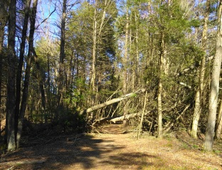 Winter storm damage on the Rockland Fireworks Trail.