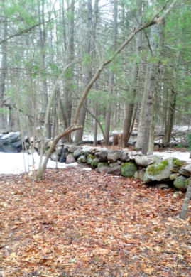 Older rock wall gets newly built up in Rockland Town Forest