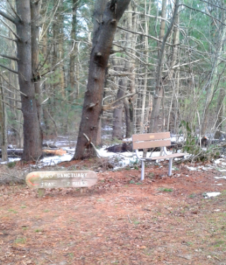 newer bench near the front of the Rockland Town Forest
