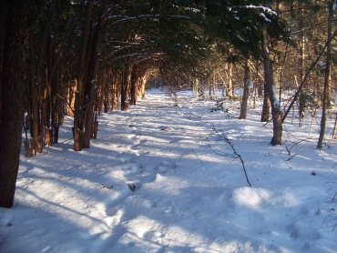 winter hiking trail in rockland town forest