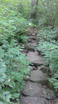 stepping stone path over rocky run stream