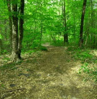 Scenic stretch of hiking trail along the Satucket Rd portion of Rockland Fireworks Trail.