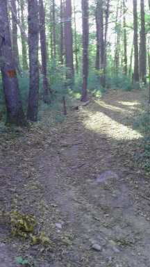 A red blazed trail at Silver Lake Sanctuary.