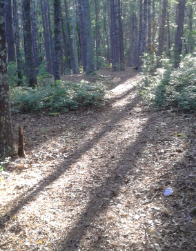 Red blazed side trail through upland woodland area at Silver Lake Sanctuary