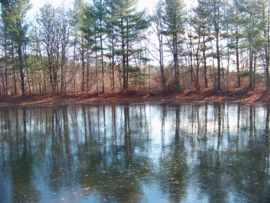 Beautiful woodland pond at Silver Lake Sanctuary