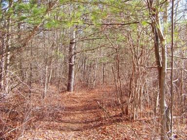 Alternate hiking trail at Silver Lake Sanctuary leads along a meadow like wetland area.