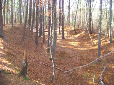 Woodland carved out by glacial activity long ago at Silver Lake Sanctuary.