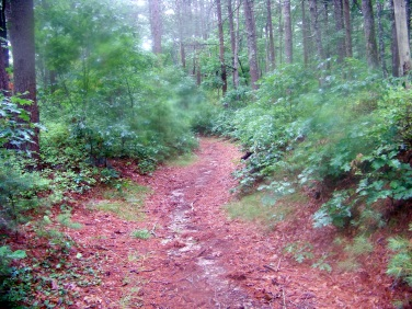 wide trail at south river bogs trail