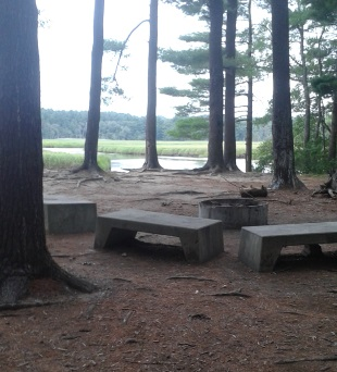 campsite on blueberry island at stetson meadows in Marshfield
