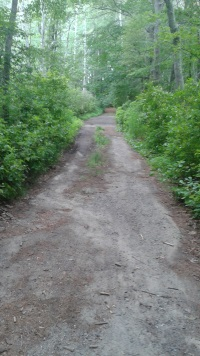 hiking trail in stetson meadows in Marshfield
