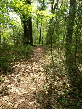 Overlook Loop trail