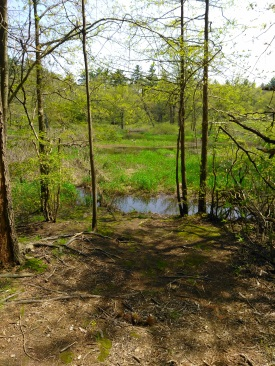 View of Winnetuxet River