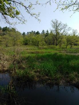 Winnetuxet River and grass lands surrounding