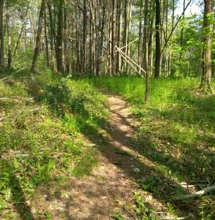 Woodland meadow at Striar