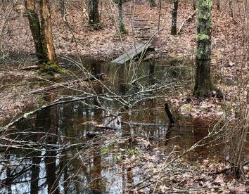 Waterlogged trail