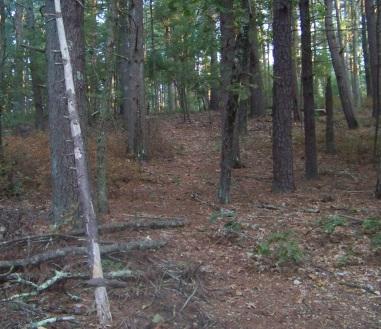 faint uphill hiking trail at thaddeus chandler sanctuary