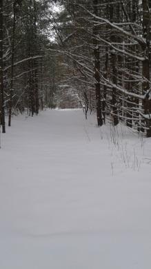winter in thaddeus chandler sanctuary