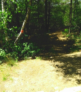 Hiking trail at Thompson Pond in Abington.