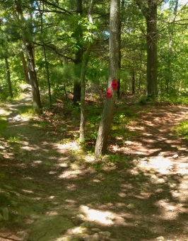 Double arrows lead the way on the Thompson Pond Trail.